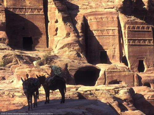 wallpaper: 'Donkeys at Petra' - Arne's Corner