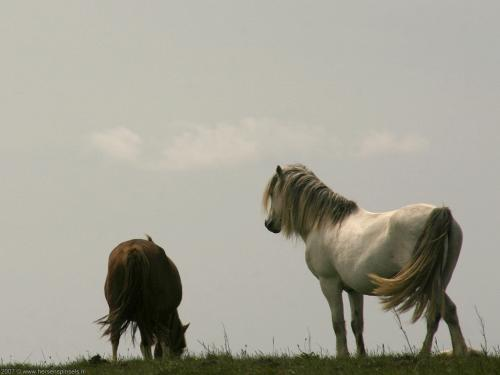 wallpaper: 'Horses' - Britain Collection