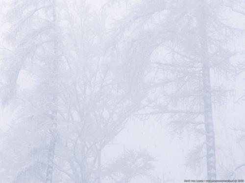 wallpaper: Witste sneeuw, Zwitserland