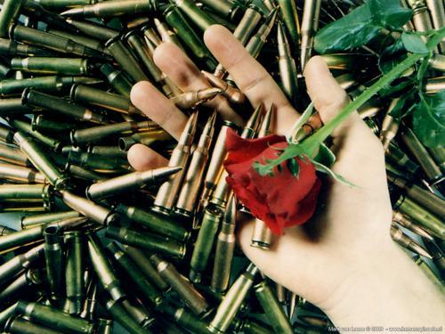 wallpaper: Wat kogels, een hand en een roos, HersenSpinsels