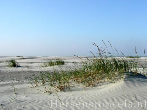 wallpaper: 'Dunes' - Flora & Fauna