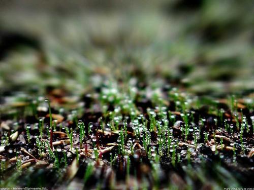 wallpaper: Gras, Flora & Fauna