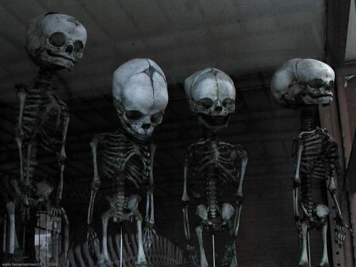 wallpaper: Vrolijke Skeletten, Flora & Fauna