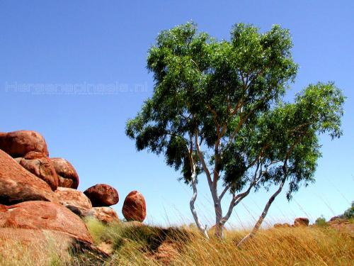 wallpaper: Knikkers (2), Australië
