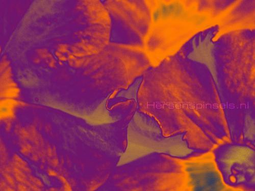 wallpaper: Petunia, HersenSpinsels