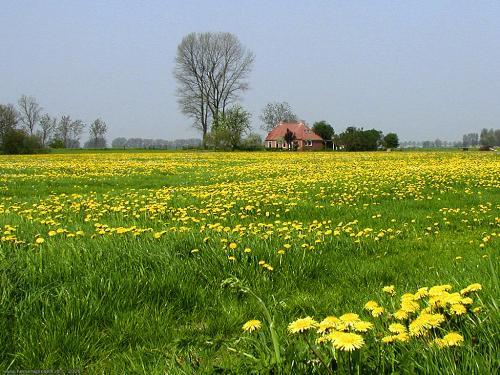 wallpaper: Weide met bloemen, Flora & Fauna