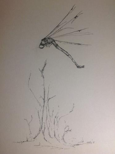 Drawing:  'Dragonfly 03'