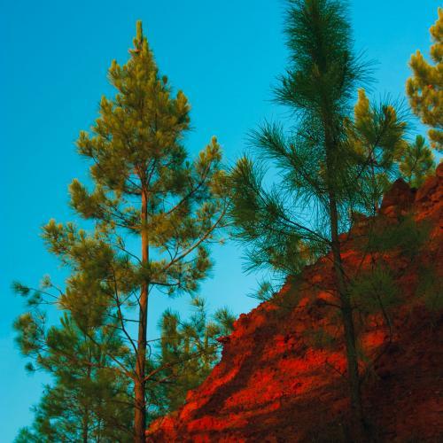 Foto:   Trees